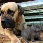 С котенком