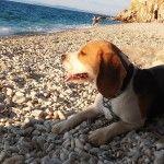 Прогулка на пляжу