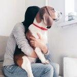 Собака Бигль — фото, описание, характер