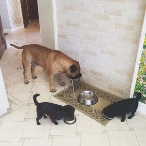 Большая семья за обедом