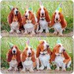 Бассет хаунд - празднуем день рождение!