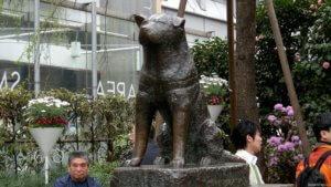 Памятник в честь хатико