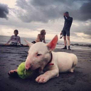 Отдых на море со своим любимцем