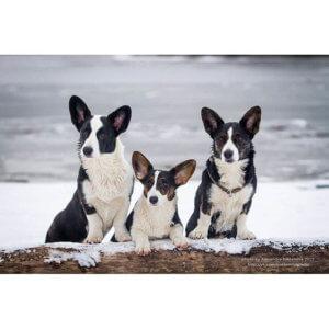 Семейство на прогулке