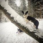 На зимней прогулке