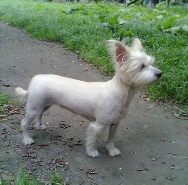 собака-московский дракон фото