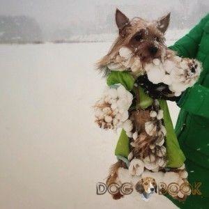 Силки фото в снегу