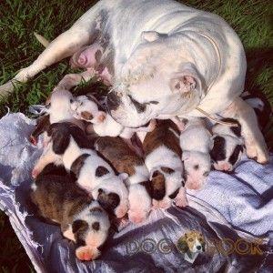 Мать с щенками