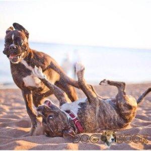 Резвимся с другом на пляже
