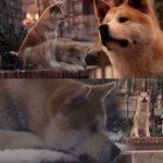 Хатико - кадры из фильма
