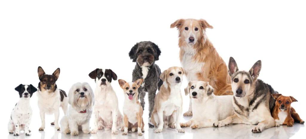 Все породы собак в одном месте