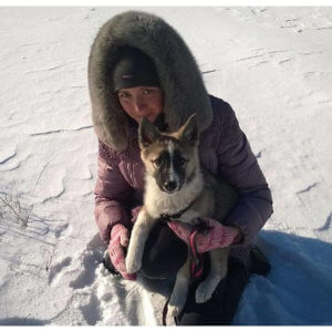 Восточно сибирская лайка фото 3