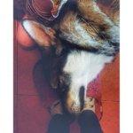 Волкособ фото 10