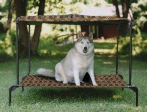 Нельзя перекармливать собаку