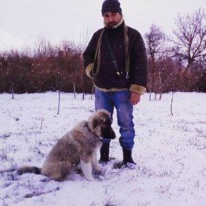 Щенок кавказской овчарки - фото 4