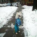 Китайская хохлатая собака - фото
