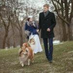 Свадьба и колли