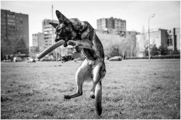 Обучение собаки послушанию