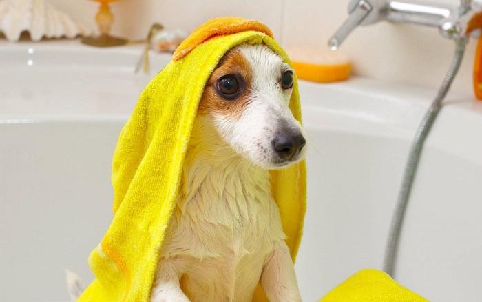 Подготовка собаки к мытью
