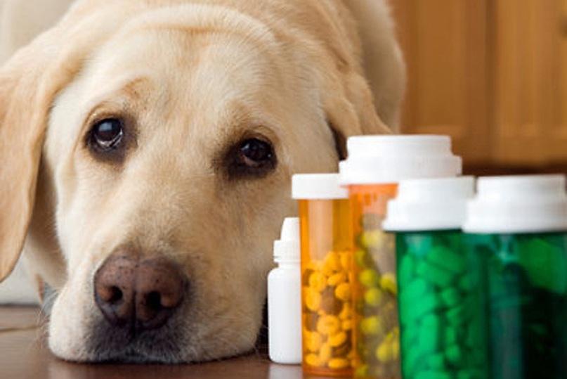 Повышение иммунитета у собаки