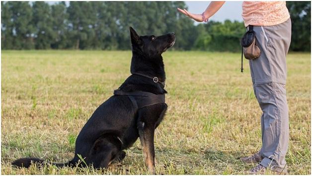 Воспитание собаки