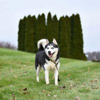 Как отучить собаку лаять на всех подряд