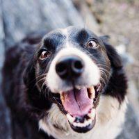 Каши для собак