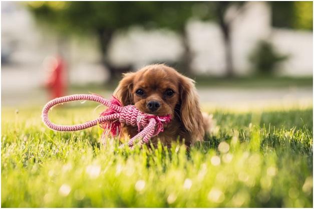 Воспитывание щенка во время игры