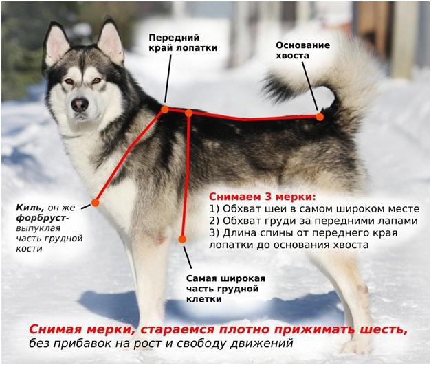 Как измерять собаку