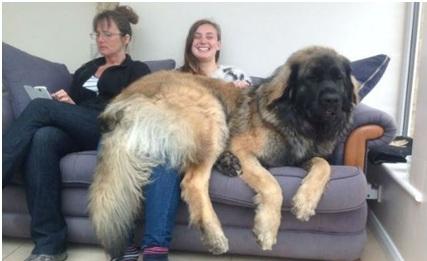 Что нужно крупным собакам
