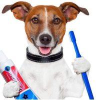 Как правильно чистить зубы собаке