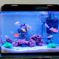Домашний аквариум