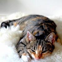 Безболезненное усыпление кошек